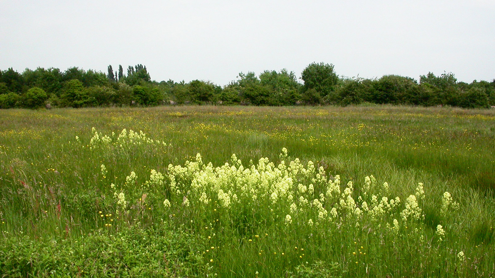 Coronation meadows for The meado